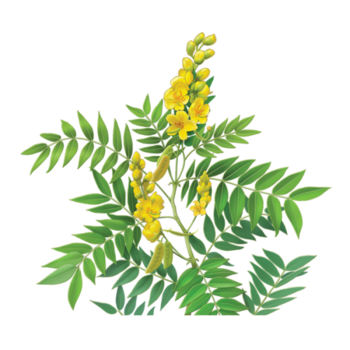 Senna Herbal Supplement